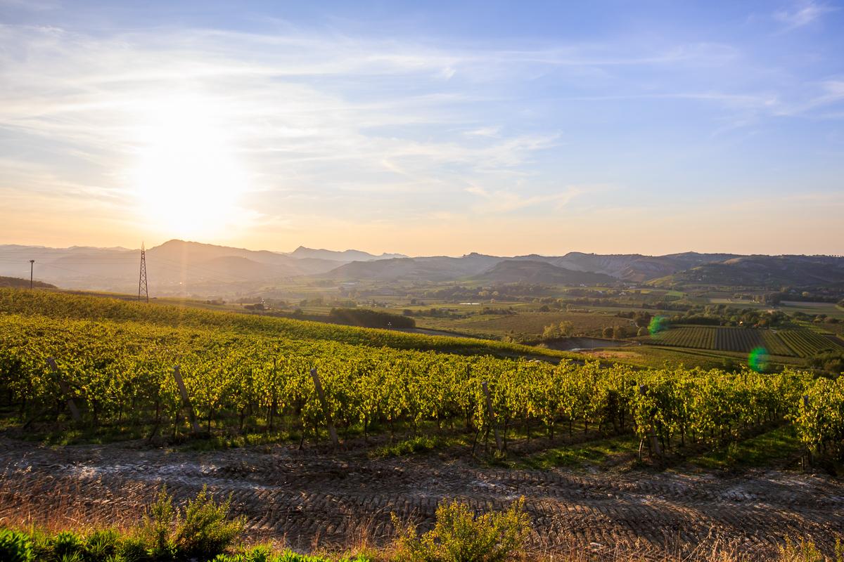 Kur gimsta putojantis vynas? Vynuogių, skirtų putojančių vynų gamybai, regionai Europoje