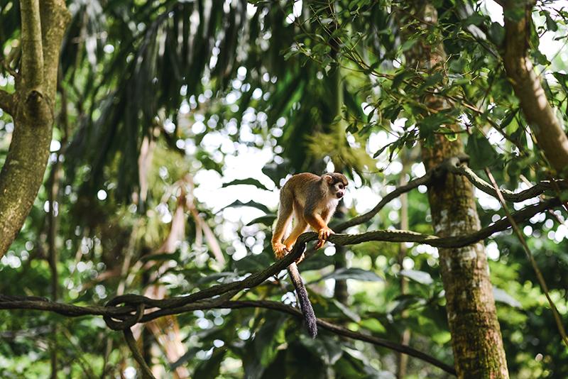 Singapūras: liūtų šalis, kur natūrali gamta – didžiausia vertybė